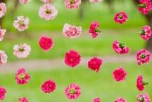 bloemen / planten