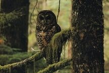 """OᏇls  / """"A wise old owl sat on an oak; The more he saw the less he spoke; The less he spoke the more he heard... / by ℬiαŋcα ღ"""
