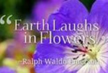 Nature Quotes / A collection nature inspired quotes and photos to brighten your day!