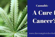 Medical Marijuana / Pin it & become a part of it...