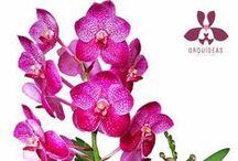 Orquídeas / Forografías de gran variedad de orquídeas.