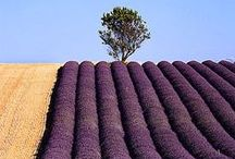 Flowering Fields / by Swallowtail Garden Seeds