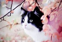 Cats in the Garden / by Swallowtail Garden Seeds