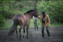 Konie / O Kochanych Konikach