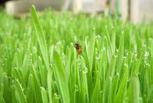 Egenodlade ekologisk grönsaker / Vi har en stor ekologisk trädgård på ca 2 hektar med så gott som alla sorters grönsaker samt en hel del bärbuskar och fruktträd. Vi har flera växthus och en liten örtagård. Du är välkommen att vandra runt och titta dig omkring. Vi erbjuder också trädgårdsvandringar och odlarkurser, både kortare och längre liksom promenader i naturen för att se vilka vilda växter, som går bra att äta.