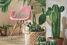 [ Home ] ✪ Plantes d'intérieur