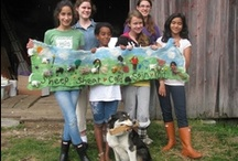 Sheep and Wool Camp for Children / Sheep and Wool Camp allows children to learn about farm life and explore the world of fiber arts.