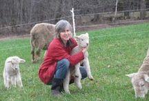 Shepherding  / For the shepherd and the sheep.