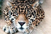 Bonis ♥ / Pets, cats, wild animals and many others