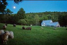 Farm Journal / Follow VT Grand View Farm's journal to keep up on all the latest news from the farm!