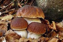 Houby/Mushrooms