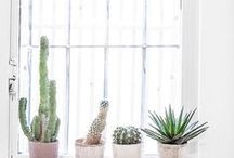 Deco | Plantas y Flores
