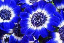 Flores int/ext