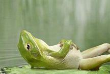 Żaby i rzekotki