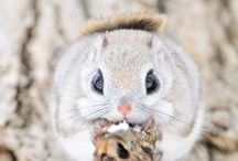 Just Cute / cute animals from all the world