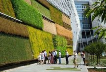Jardines Verticales. / #DiseñoCReO