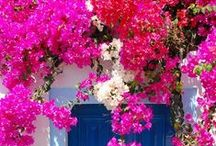 GREECE | Color Fuchsia