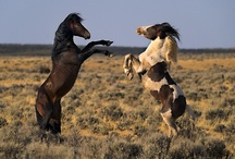 Horses in Action / by Shelly Beard