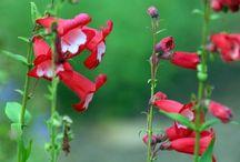 Garden / Plants and plans for a dartmoor garden
