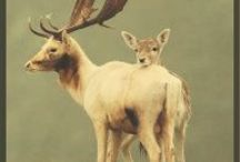 It's a Deer old world