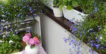 Mój balkon / balkon, kwiaty