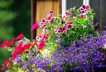 Цветочное настроение / Красивые цветы для всех