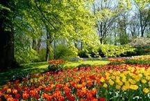 Природа / Красота вокруг нас