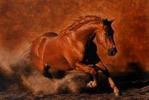 """Лошади / """"Там, где находится лошадь, там не бывает нечистой силы"""" Казахская пословица"""