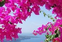 Greece  ✈️  Ελλάδα / Η Ελλάδα είναι η χώρα του λαμπερού ήλιου και του απέραντου γαλάζιου.Είναι η χώρα της ένδοξης ιστορίας και των ηρωικών αγώνων,η χώρα του πολιτισμού και των τεχνών κι ακόμα είναι η χώρα των συναισθημάτων και της ελεύθερης έκφρασης