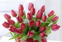 Цветочное настроение. Тюльпаны