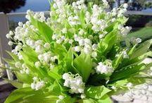 Цветочное настроение. Ландыши. Подснежники. Крокусы. Гиацинты. / Первые весенние цветы.