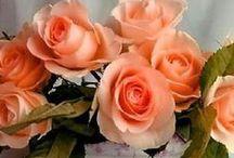 Цветочное настроение. Розы.