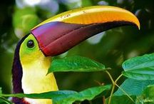 Costa Rica / Travel the Central American country of Costa Rica.
