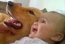 funny animals / animals
