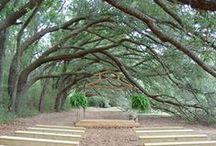 Alabama, USA / Exploring the virtues of state of Alabama, USA.