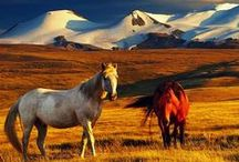 Mongolia / Exploring the wonders of the country of Mongolia.