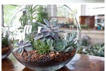 Diy Plante,  Mangeoire & Maison à oiseaux... ...  / Parfois il faut si peu pour avoir de belles plantes, voir les oiseaux dans nos jardins, avoir  des objets que l'on peut fabriquer avec des pots en terre cuite, ou bien concevoir une fontaine, un barbecue, des décors pour avoir un jardin qui ne ressemble qu'à nous  ... ...  / by Caroline