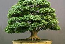Bonsai Trees / Amazing miniature trees!