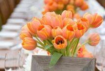 Orange Details