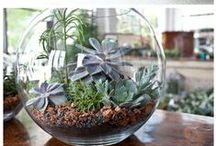 Planting in Containers / Pot Plant & Glass Plant Ideas
