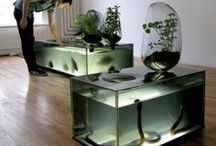 Aquaponics / Inspiring pictures of aquapoinc systems / by erik moesker