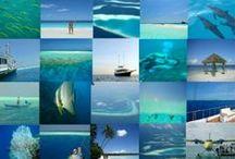 Advertisement Cruise-Maldives.com / Maldivians commercials Cruise-Maldives.com