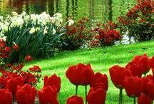 λουλούδια / λουλούδια