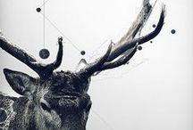 Digital art / by Darren Custance