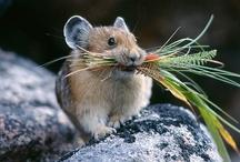 Rats & Mice / Rats and Mice