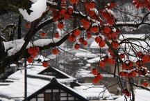 Japan / by NoBeatenPath