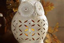 Owls / I love Owls their a hoot.
