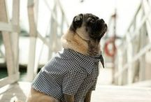 Pet Clothing / cool clothes for your dog and cat!