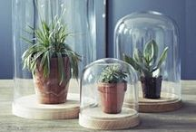 Bell Jar Decor Ideas / Bell jars, cloches and glass domes can be an easy and beautiful way to display collected treasures or cakes and foodie treats. / by ACHICA
