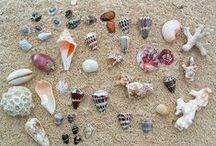 Beach / Ideas and inspiration for teaching kids about the beach. High and low tide. Beach sensory ideas. Shells. Crafts. Sand activities. Beach animals.